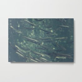 One Fish, Two Fish Metal Print