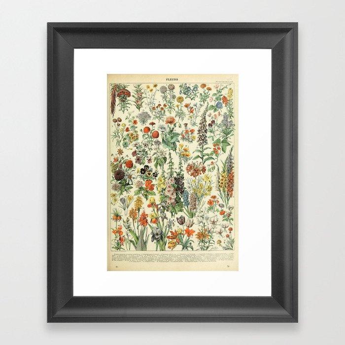 Adolphe Millot Vintage Fleurs Flower 1909 Gerahmter Kunstdruck