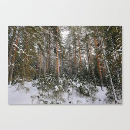 Winter in the wildwood. Canvas Print