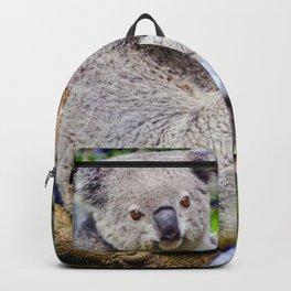 Australian Koala Bear Photo Backpack