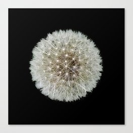 Dandelion Love Canvas Print