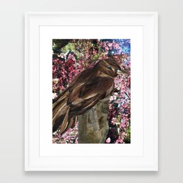 Xenop Framed Art Print