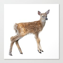 whitetail deer fawn watercolor, isolated on white background Canvas Print