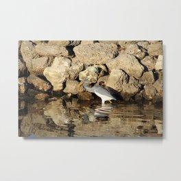 Heron Chasing Fish Metal Print