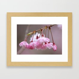 Dragonfly in Blossoms Framed Art Print