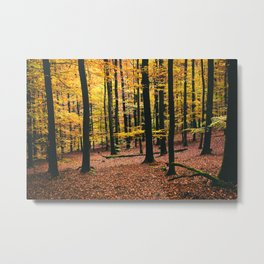 Yellow Orange Autumn Fall Forest Metal Print