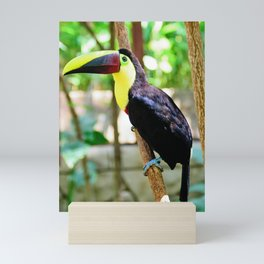 Yellow-Throated Toucan Mini Art Print