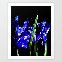 Among the Ladies Artist Series jGibney Irises Art Print