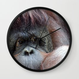 Pongo Wall Clock