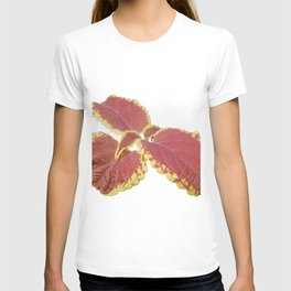 Red Croton T-shirt