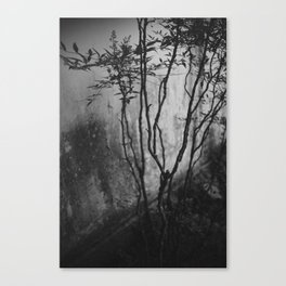 stain Canvas Print