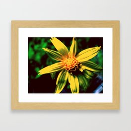 Vintage Yellow Flower Framed Art Print