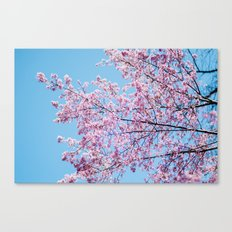 Sakura 05 Canvas Print
