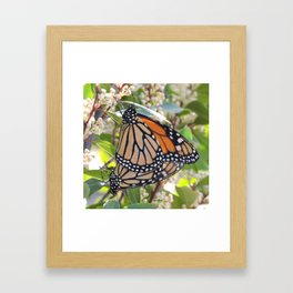 Love in the Air - Monarch Style Framed Art Print