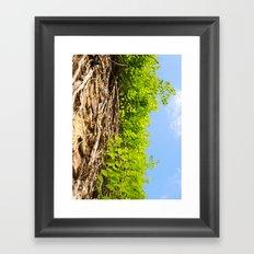 Vines in Mobile, AL Framed Art Print