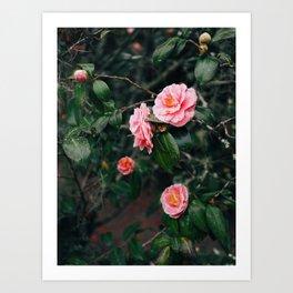 Pink Floral II Art Print