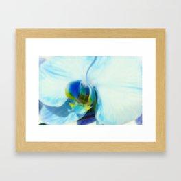 Blue Orchid II Framed Art Print