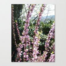 Nature rises Canvas Print