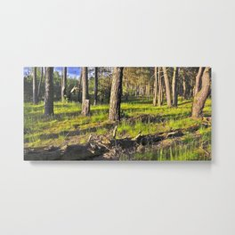Dreaming Pine Trees in the Evening Light Metal Print