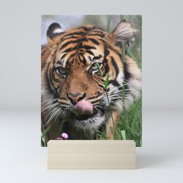 Amur Tiger Mini Art Print