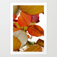 fall out. Art Print