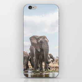 Drinking Elephant herd iPhone Skin
