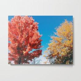 Color in Creation Metal Print