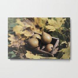 Fall still life pears pyrus fruit in wooden baske Metal Print