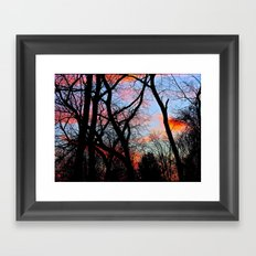 Sunset Through the Tangled Trees Framed Art Print