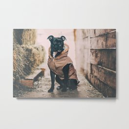 Canine 1 Metal Print