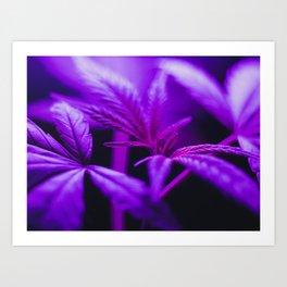 Purple Haze Art Print