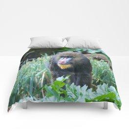Baboon Comforters