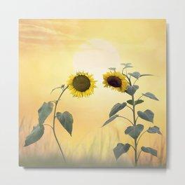 Beautiful blossom of sunflowers Metal Print