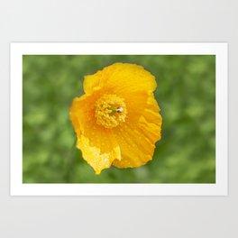 Orange Garden Flora Art Print