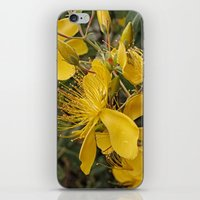 marc johns iPhone & iPod Skins featuring Beautiful St Johns Wort by Wendy Townrow