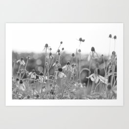 Wildflowers in the country Art Print
