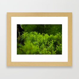 Silk of nature Framed Art Print