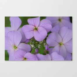 Beauty in Bloom 3 Canvas Print