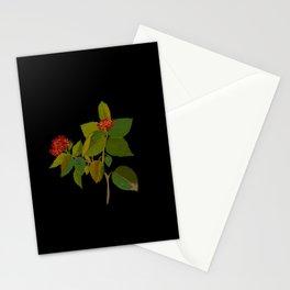 Lantana Mary Delany Vintage Floral Collage Botanical Flowers Black Background Stationery Cards
