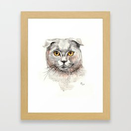 Scottish Fold Cat Framed Art Print
