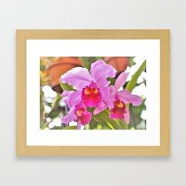 Cattelya Hybrid Orchid Framed Art Print