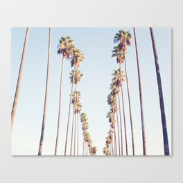 Palm tree stripes Canvas Print