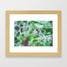 Bee in the Purple Flowers Framed Art Print