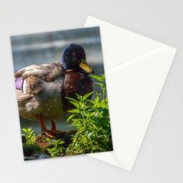 Mallard. Stationery Cards
