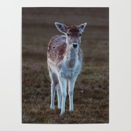 Bambi Baby Deer at Richmond Park London Poster