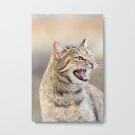 Beautiful cat Metal Print