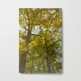 Fall Yellow Trees Metal Print