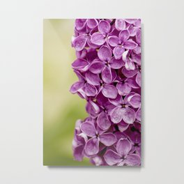 Beautiful Lilac Metal Print