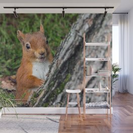 Nature woodland animals smiling squirrel Wall Mural
