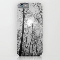 Bare Trees  series (6) iPhone 6 Slim Case